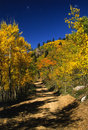 Dirt Road in Aspens in Fall Royalty Free Stock Photos
