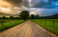 Dirt road at cade s cove in the morning on a foggy great smoky mountains national park tennessee Stock Images