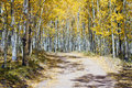 Dirt road through fall aspen forest in colorado a thick golden tree the rocky mountains during Stock Photo