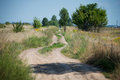Dirt road in the field Royalty Free Stock Photo