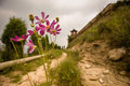 Dirt road with flowers leading up to small pagoda in a rural area shanxi province china Royalty Free Stock Images