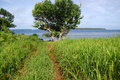 Dirt road at grass field near ocean coast kingdom of tonga Stock Images