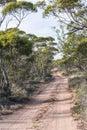 Dirt Road, Gumtrees, Australia Royalty Free Stock Photo