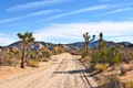 Dirt Road Joshua Tree Royalty Free Stock Photo
