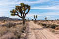 Dirt road joshua tree national park the to barker dam area in Royalty Free Stock Images