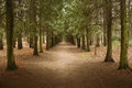Dirt road leaving thru forest Royalty Free Stock Photo