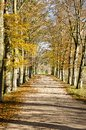 Tree-lined dirt road with fence