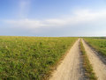 Dirt road in the meadows summer meadow grasses winds its way to horizon Stock Photography