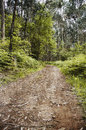 Dirt road between the trees of the forest Stock Photography
