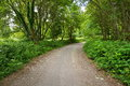 Dirt road with trees in ireland Royalty Free Stock Photo