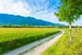 Dirt road trough italian countryside Royalty Free Stock Photo