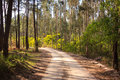 Dirt road trough woods under sunlight Royalty Free Stock Image