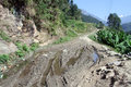 Dirt road wet near banana trees in nepal Stock Photo