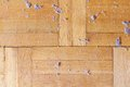 Dirty dusty wooden floor parquet with dust hygiene concept Stock Photos