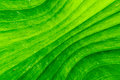 Dirty green banana leaf texture