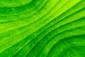 Dirty green banana leaf texture