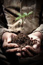 Dirty Hands hold the sprout with the earth, the concept of ecology, birth, success and the environment Royalty Free Stock Photo