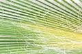 Dirty palm leaf