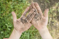 Dirty palms of the child. Dirty hands of a child in the ground. Royalty Free Stock Photo