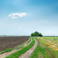 Dirty road to horizon under blue sky in agriculture fields Stock Photo