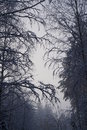 Dis i tåkesiden i skogen hedmark Royalty Free Stock Image