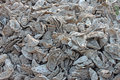 Discard pile of oyster shells closeup a discarded in oysterville washington Royalty Free Stock Photography