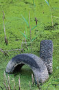 Discarded old tyres in contaminated pond puddle, water pollution Royalty Free Stock Photo