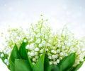 Diseño floral del lirio de los valles manojo de flores blancas de la primavera Imágenes de archivo libres de regalías