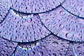 Disk and water drops Royalty Free Stock Photo