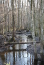 Dismal Swamp Royalty Free Stock Photo