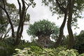 Disney Animal Kingdom - Tree of Life Royalty Free Stock Photo