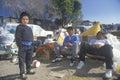 Displaced Hispanics during the earthquake