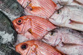 Display Red Snapper and Tilapia Royalty Free Stock Photo