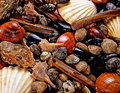 Display of shellfish Royalty Free Stock Photo