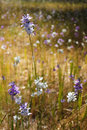 Display in the wild flowers australian countryside Royalty Free Stock Images