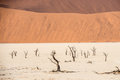 Distant dead dry trees of DeadVlei valley at Namib desert Royalty Free Stock Photo