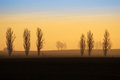 Distant trees silhouettes at sunrise on the horizon in the early morning Royalty Free Stock Images