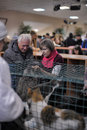 Distribution of charity exhibition of animals from the shelter way home show animal rzhevka st petersburg russia Stock Image