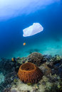 Disused plastic bag floating over a coral reef discarded drifts tropical causing hazard to marine life such as turtles Stock Photography