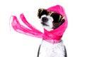 Diva chic dog Royalty Free Stock Photo