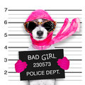 Diva chic dog Royalty Free Stock Photo