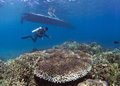 Dive guide under dive boat scuba diver over coral reef with on surface bunaken island indonesia Stock Photo