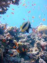 Dive scene Royalty Free Stock Images