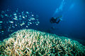Diver blue water scuba diving bunaken indonesia sea reef ocean Royalty Free Stock Photo