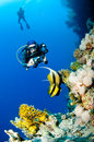 Diver with camera along the reef, Red Sea Stock Image