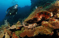 Diver on coral reef. Stock Photos