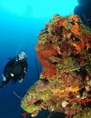 Diver on coral reef. Stock Photography