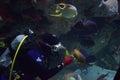 Diver feeds the fish in the aquarium baltimore Stock Image