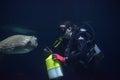 Diver feeds the fish in the aquarium baltimore Stock Photos
