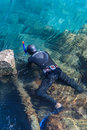 Diver fishing for mussels a scuba is just below the water surface Stock Image